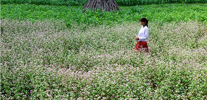Kinh nghiệm bỏ túi cho dân phượt Hà Giang mùa hoa tam giác mạch - 5