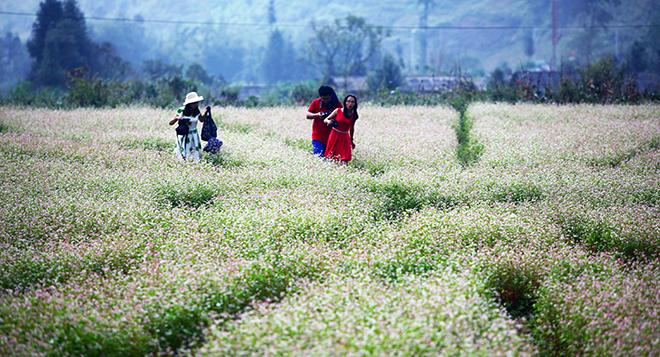 Kinh nghiệm bỏ túi cho dân phượt Hà Giang mùa hoa tam giác mạch - 3