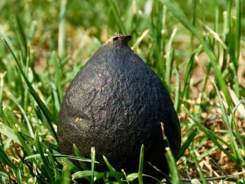 Đào ổ kiến để tìm giống nấm quý hiếm, giá 68 triệu/kg - 1