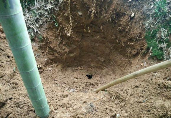 Đào ổ kiến để tìm giống nấm quý hiếm, giá 68 triệu/kg - 5