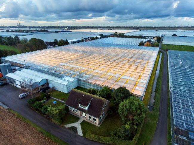 """Chiêm ngưỡng các trang trại trong nhà kính """"đẹp như tranh"""" ở Hà Lan - 2"""