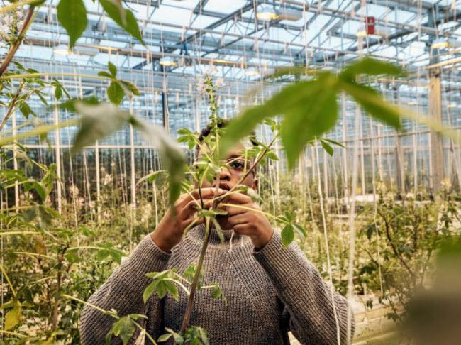 """Chiêm ngưỡng các trang trại trong nhà kính """"đẹp như tranh"""" ở Hà Lan - 4"""