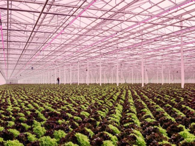 """Chiêm ngưỡng các trang trại trong nhà kính """"đẹp như tranh"""" ở Hà Lan - 5"""