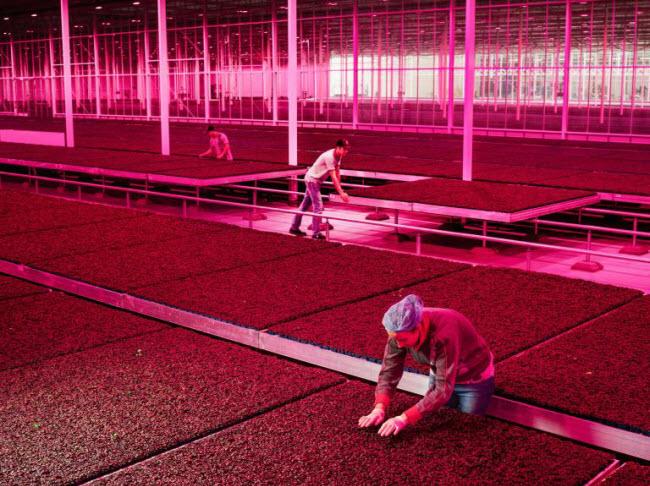 """Chiêm ngưỡng các trang trại trong nhà kính """"đẹp như tranh"""" ở Hà Lan - 8"""