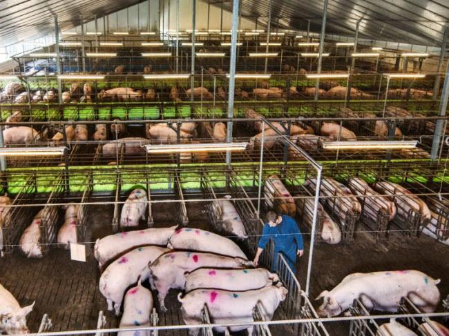"""Chiêm ngưỡng các trang trại trong nhà kính """"đẹp như tranh"""" ở Hà Lan - 11"""