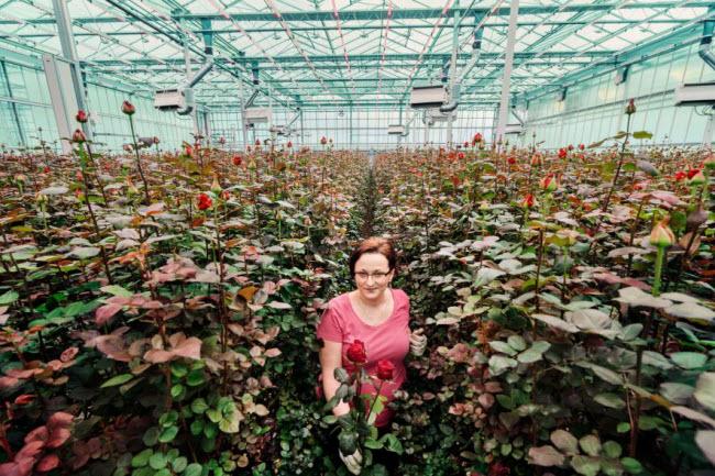 """Chiêm ngưỡng các trang trại trong nhà kính """"đẹp như tranh"""" ở Hà Lan - 12"""
