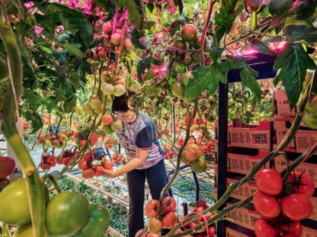 """Chiêm ngưỡng các trang trại trong nhà kính """"đẹp như tranh"""" ở Hà Lan - 9"""