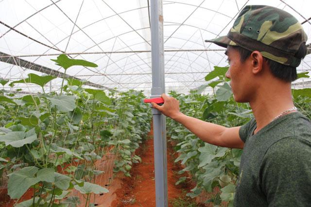 """9X bảnh trai xuất ngũ về quê, trồng vườn dưa lưới """"vạn người mê"""" - 3"""