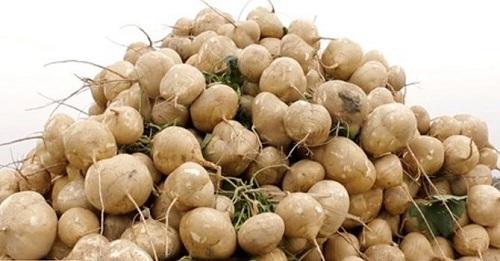 Lợi ích sức khỏe của cây củ đậu - 2