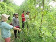 Thị trường - Tiêu dùng - Trồng rừng gỗ lớn nhiều lợi ích, thu nhập lên tới 160 triệu/ha