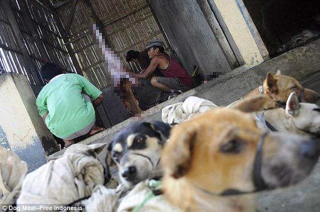 Rợn người cảnh chặt đầu trong lò mổ chó ở Indonesia - 3