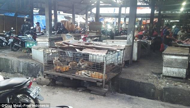 Rợn người cảnh chặt đầu trong lò mổ chó ở Indonesia - 4