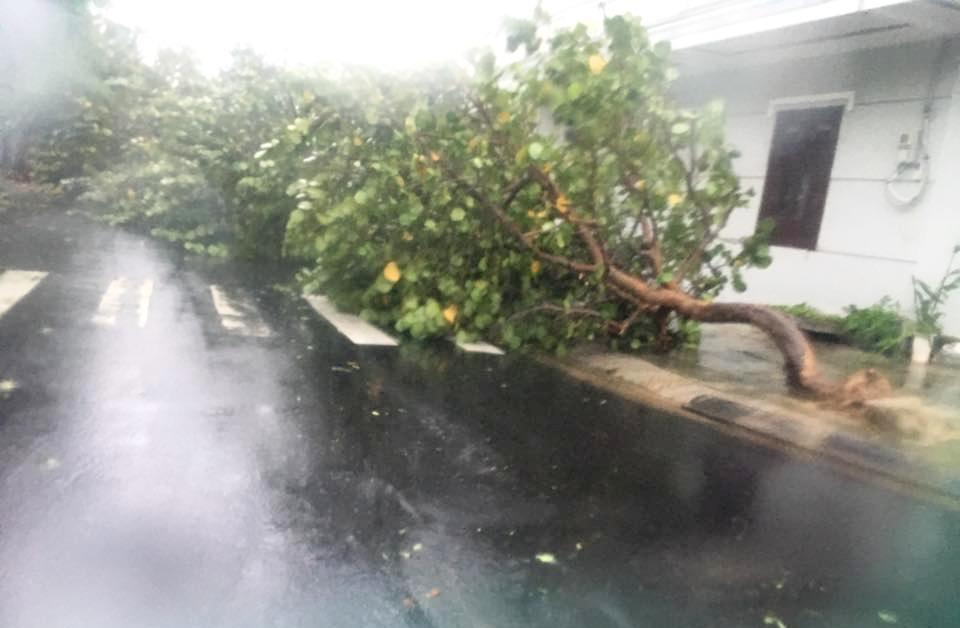 Chùm ảnh sức tàn phá khủng khiếp của bão số 12 - 15