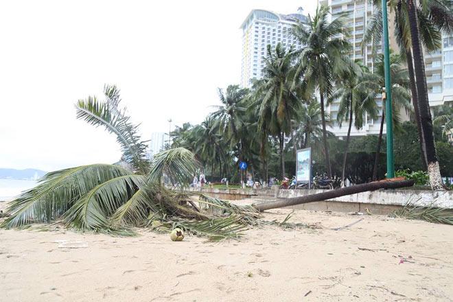 Tàn phá Nam Trung Bộ, bão tiếp tục gây thiệt hại ở Tây Nguyên - 4