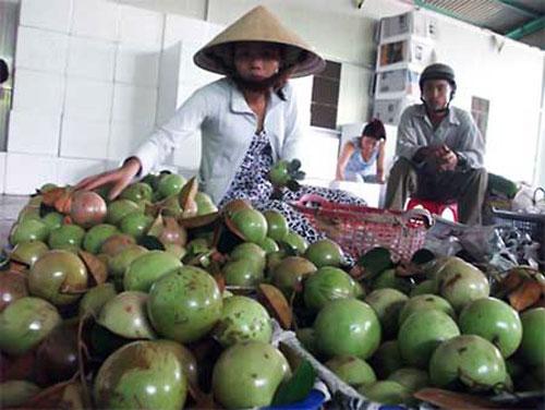 Xuất khẩu rau quả sẽ thu về được tới 69.000 tỷ đồng - 1
