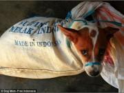 Rợn người cảnh chặt đầu trong lò mổ chó ở Indonesia