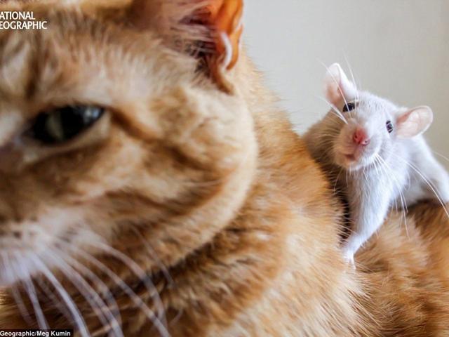 Clip: Khi các boss mèo nghiện đồ công nghệ - 1