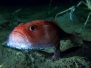 """Phi thường - kỳ quặc - Sửng sốt phát hiện cá có chân đang """"đi dạo"""" dưới đáy biển"""