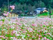 Du lịch - Vi vu Hà Giang ngắm mùa hoa tam giác mạch nở đẹp ngất ngây