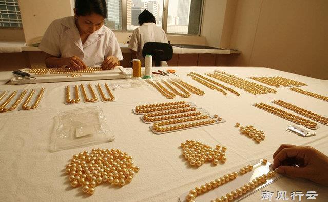 Ngọc trai vàng: Giá gần 14 triệu/gram, nuôi 2-5 năm mới đủ lớn - 10