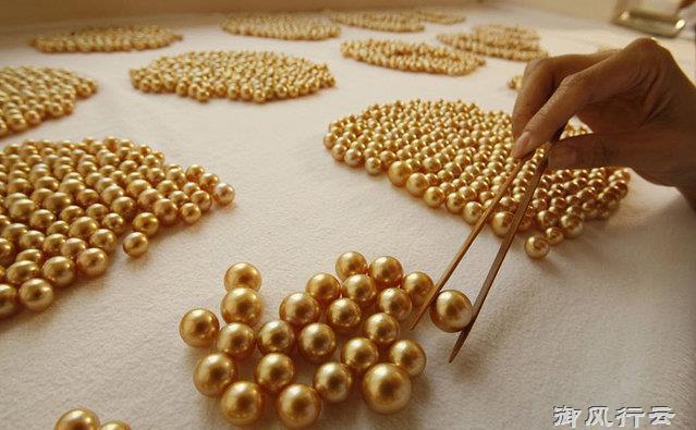 Ngọc trai vàng: Giá gần 14 triệu/gram, nuôi 2-5 năm mới đủ lớn - 8