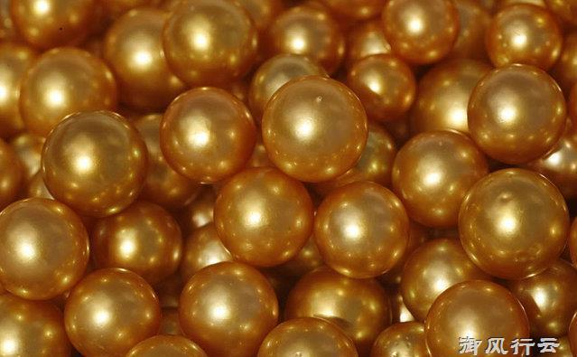 Ngọc trai vàng: Giá gần 14 triệu/gram, nuôi 2-5 năm mới đủ lớn - 9