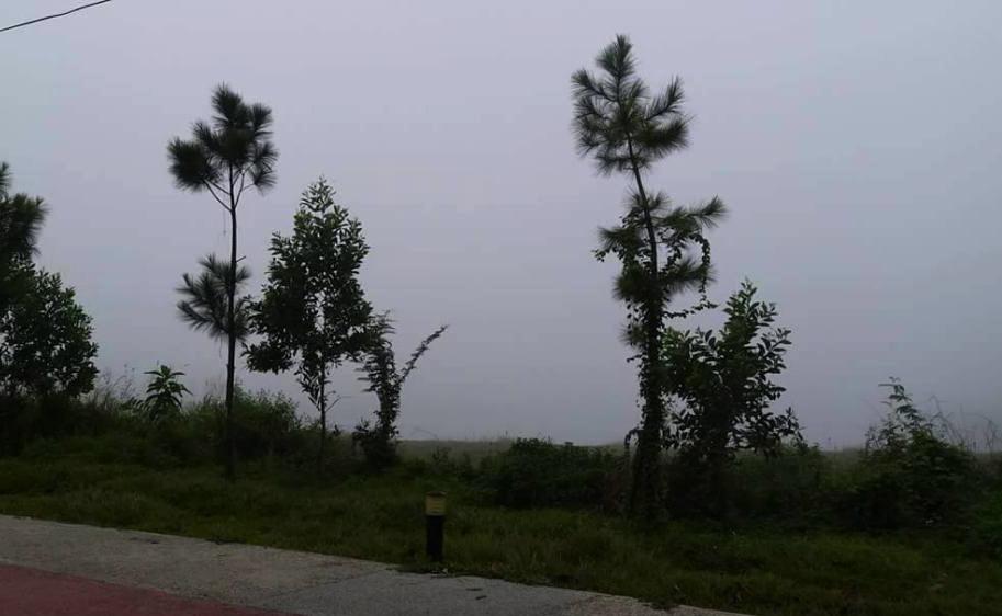 Ảnh: Sài Gòn bồng bềnh trong sương mù dày đặc - 5