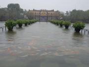 """Chuyện hiếm: Đàn cá  """" vua """"  bơi tung tăng trên cầu ở Đại nội Huế"""