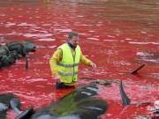 Thế giới - Công bố ảnh sốc chụp thảm sát cá voi đẫm máu ở Đan Mạch