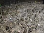 Mộ cổ 2.400 năm chứa dấu tích của giới quý tộc Trung Quốc
