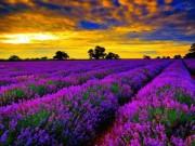 """"""" Đứng hình """"  trước những thung lũng hoa quyến rũ nhất hành tinh"""