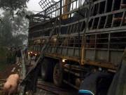Xôn xao chuyện xe chở lợn bị lật, người dân thi nhau  hôi của  ở Lạng Sơn