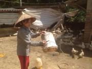 Cho ngan, gà chung 1 nhà, lãi hơn 200 triệu/năm