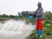 Làm giàu ở nông thôn: Biến ruộng trũng thành trang trại  vàng