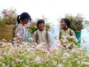 Đến Hà Giang, đừng quên đến 5 địa điểm ngắm hoa tam giác mạch đẹp nhất mùa này