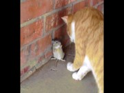 """Clip hài:  """" Đau ruột """"  với Tom và Jerry phiên bản đời thực"""
