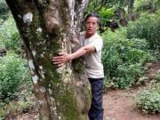 """Nông dân làm giàu: Có tiền tiêu đều đều từ 300 gốc cây  """" bất tử """""""