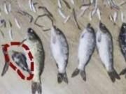 Đi tù hơn 3 năm vì giết một con cá nhỏ nặng 50 gram
