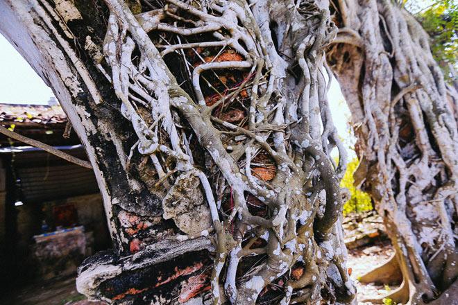 Kỳ thú đình làng nằm gọn trong bộ rễ của hai cây bồ đề - 3