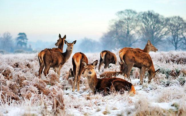 Richmond Park, Vương quốc Anh: Công viên lớn nhất của London thậm chí còn đẹp hơn vào mùa đông. Với diện tích 2500 mẫu Anh, lớn gấp 3 lần so với công viên Central Park của New York. Với khung cảnh tự nhiên hoang dã và những chú nai con vui vẻ nhảy nhót xung quanh, du khách như đang lạc vào một thế giới thần tiên