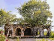 Kỳ thú đình làng nằm gọn trong bộ rễ của hai cây bồ đề