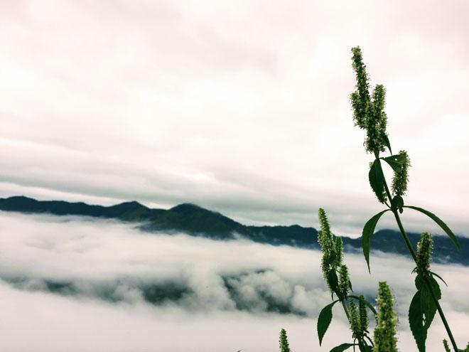Gió đổi mùa, rủ nhau lên Tà Xùa săn mây - 16