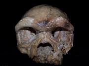 Hộp sọ tìm thấy ở TQ có thể viết lại lịch sử loài người