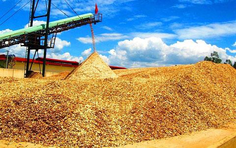 """Trung Quốc lại """"giở trò"""" ngừng thu mua dăm gỗ để ép giá? - 1"""
