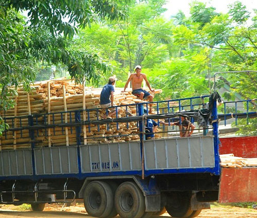 """Trung Quốc lại """"giở trò"""" ngừng thu mua dăm gỗ để ép giá? - 3"""