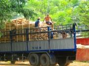 """Trung Quốc lại  """" giở trò """"  ngừng thu mua dăm gỗ để ép giá?"""