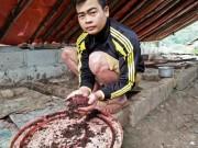 Làm giàu ở nông thôn: Cử nhân người Nùng về quê nuôi giun quế