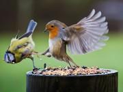 Chồng thi chim, vợ hậu thuẫn
