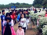 HN: Bất chấp rét đậm, hàng nghìn người đổ về Nhật Tân check-in cúc họa mi