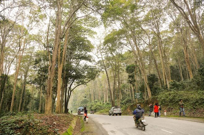 Ngắm rừng săng lẻ nguyên sinh đẹp như tranh giữa đại ngàn xứ Nghệ - 2